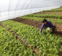 La Chine tente d'augmenter ses récoltes à l'aide de champs électriques