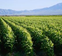 La Californie interdit un pesticide largement utilisé et lié à des lésions cérébrales chez les enfants